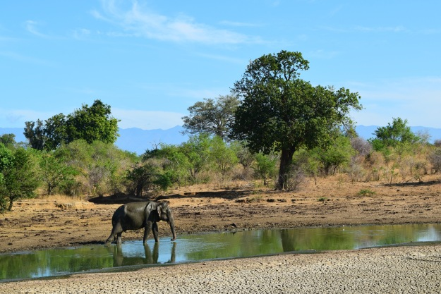 Safari em Udawalawa, Sri Lanka